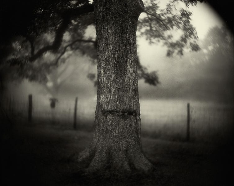 sally-mann,photography,southern-landscape,collodion,pictorialism