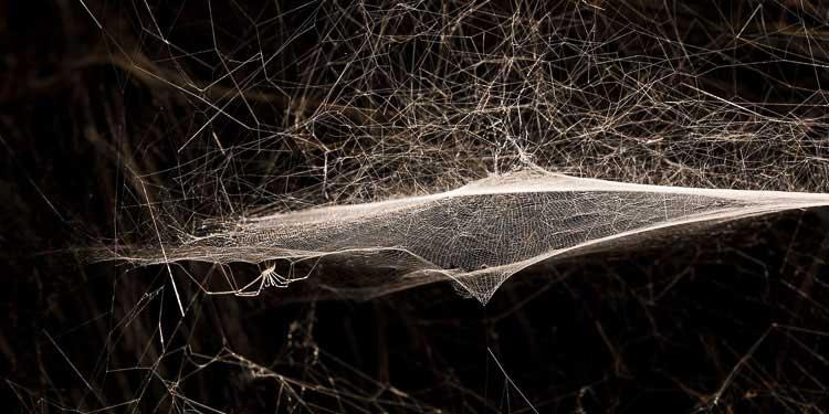 tomas-saraceno_spider_on-air_palais-de-tokyo