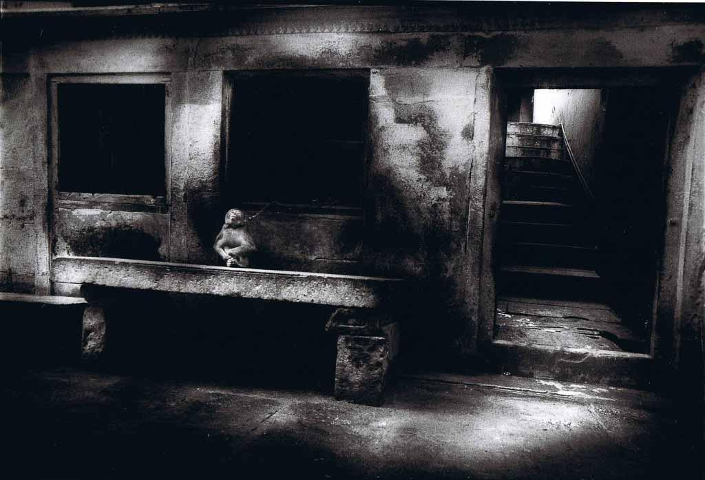 michael-ackerman_photography_solo-show_camera-obscura-gallery_paris_2019